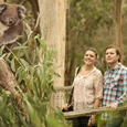 Encounter the Kangaroo, Koala and Platypus on this New Melbourne Wildlife Tour